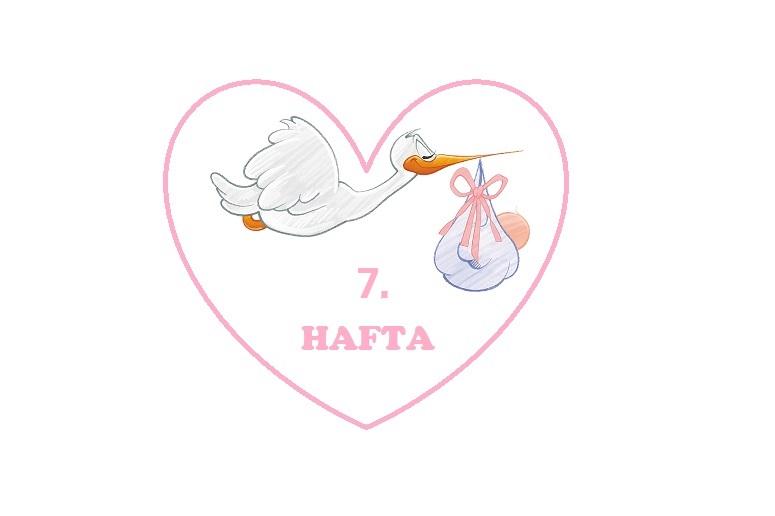 7 haftalık hamilelik